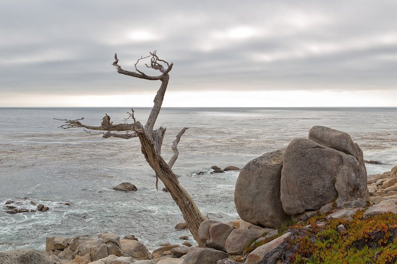 Pebble Beach 17 Mile Drive And Pacific Grove California The Ghost Tree Pescadero Point